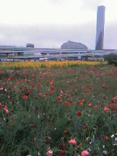 臨海副都心ワイルドフラワー祭り 2006 春